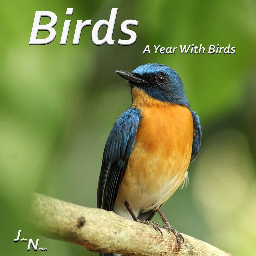 Vögel über ein Jahr