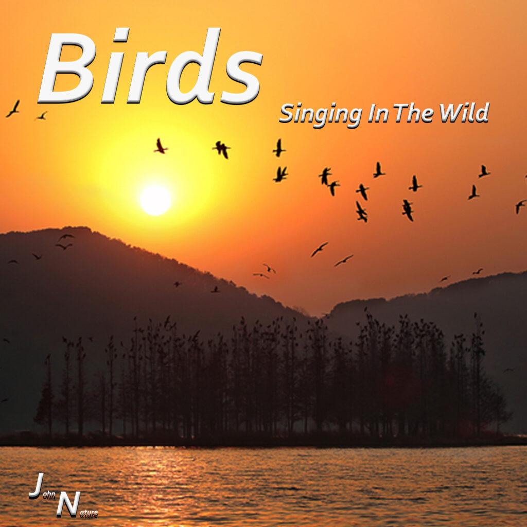 Vogelstimmen in der Natur