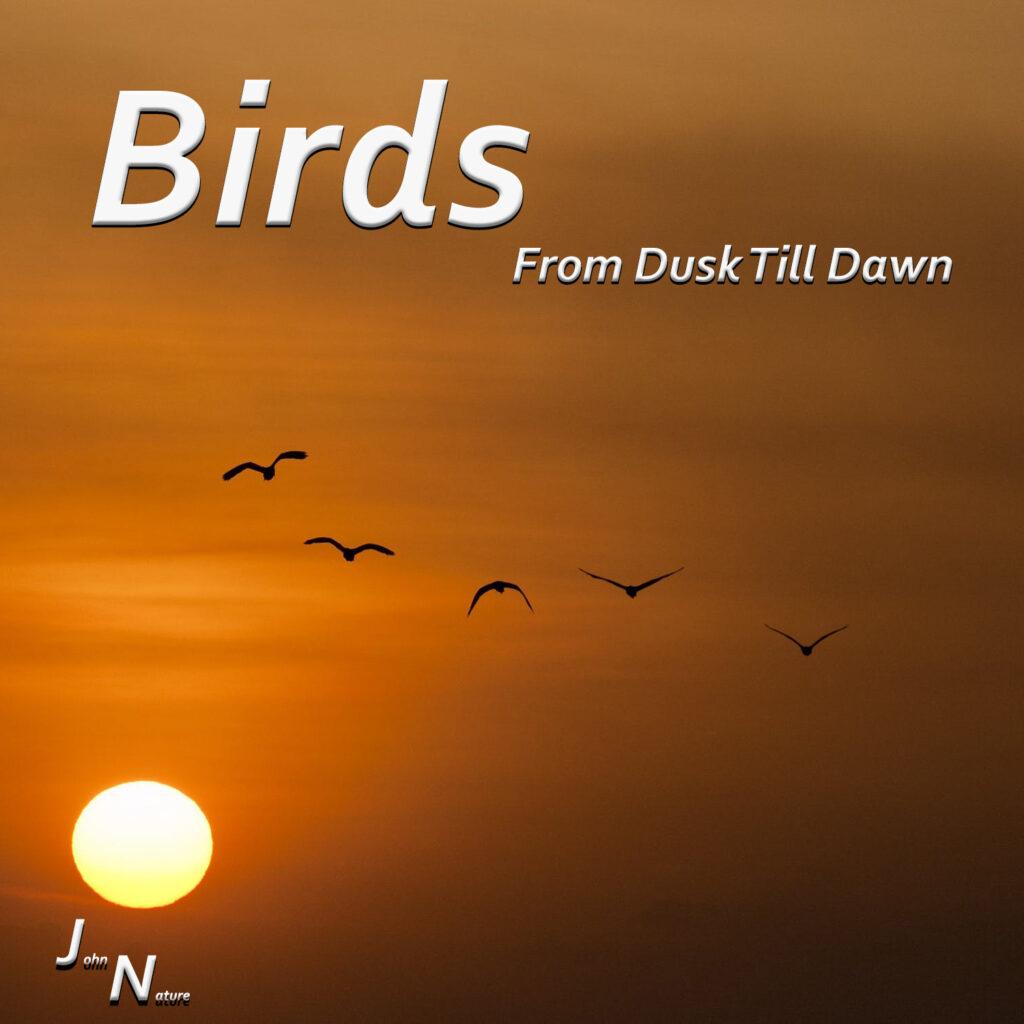 Vögel von morgens bis abends.