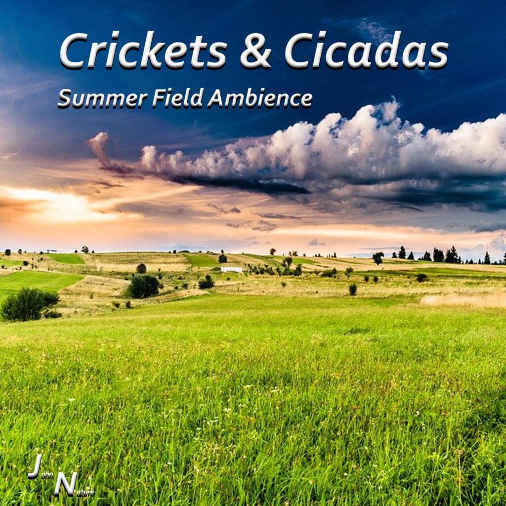 Grillen und Zikaden im sommerlichen Feld.