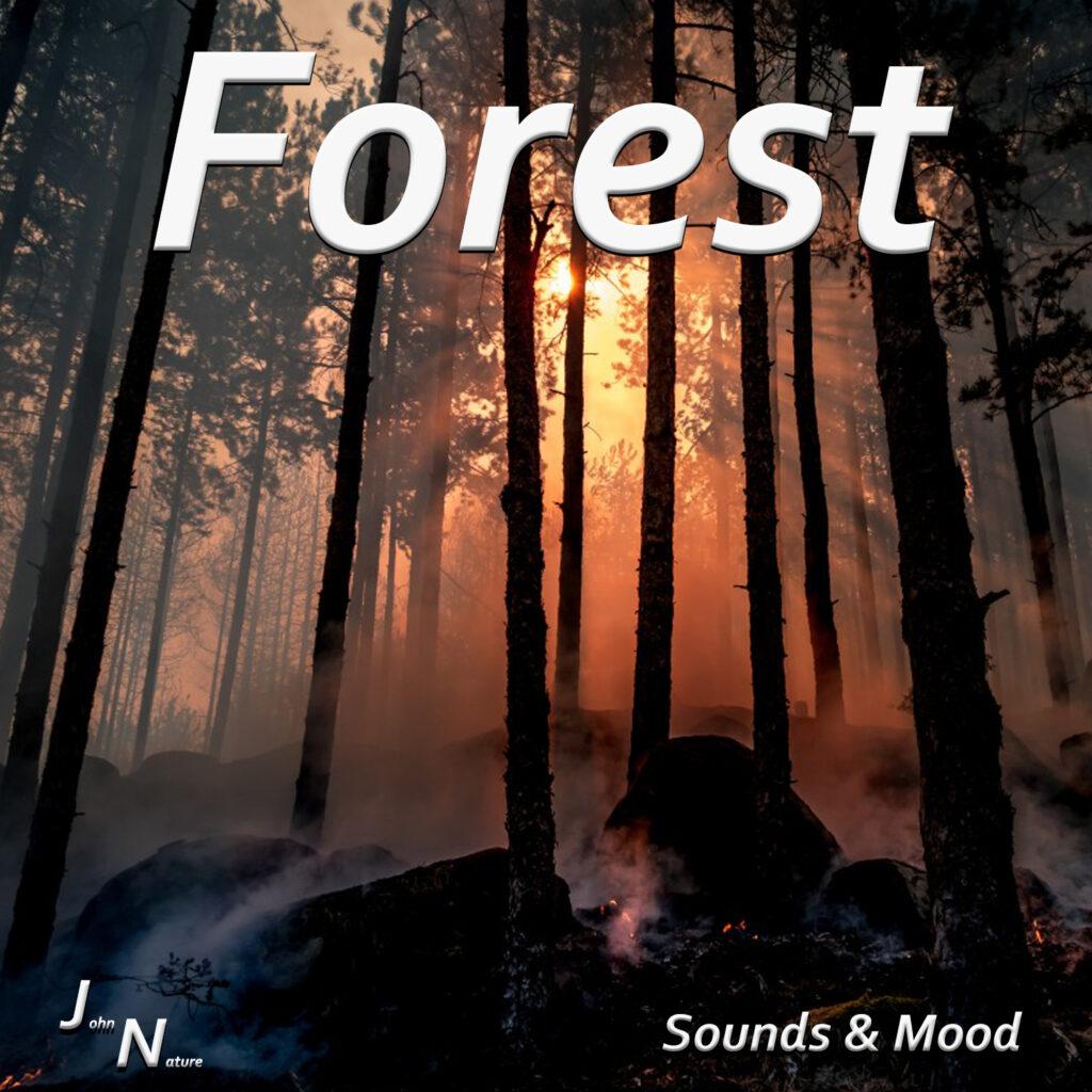 Naturgeräusche aus dem Wald. Von Vogelgezwitscher bis Wind.
